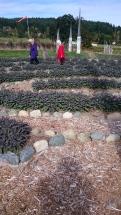 Peace Garden Sage Labyrinth