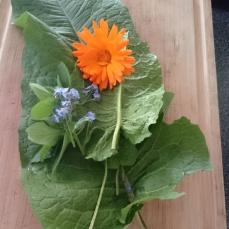 Edible Flowers & Weeds