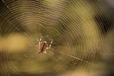 spider-4471795_960_720